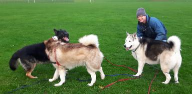 The best dog trainer