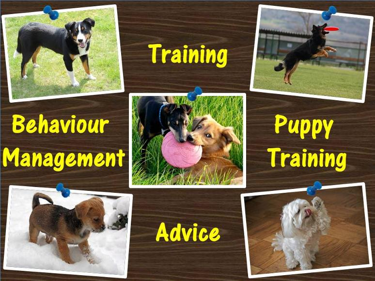 Doncaster puppy training